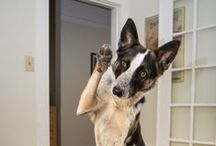 Tips & Tricks / Tips and tricks to make you one savvy pet owner!