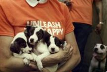 YOUR Dogswell Pins! / Some Pinteresting things about Dogswell!