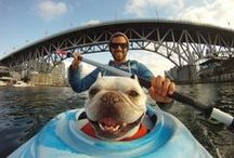 Doggie Destinations / Fun places to travel with your pup, as well as unconventional ways to keep your dog engaged and active, because healthy dogs are HAPPY dogs!