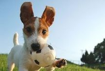 Unleash the Happy / Happy, healthy dogs playing harder, smiling wider, and wagging that tail like there's no tomorrow!