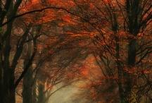 Seasons / by Judy Bonds