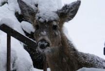 Deer me...