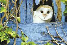 Owls strange facinating beauty / by Marie Helen