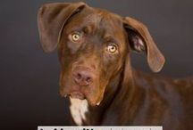 Pet Connection / Check out all things pets related.  / by Tucson News Now