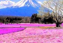World Thinking Day-Japan