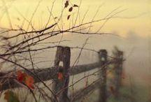 autumn:  i love it!