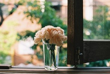 photography i love. / Photography & photographers I truly admire.