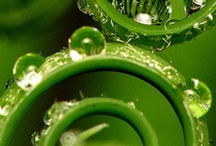 my other fav colour is lime/bright green / by Lindsey Henderson