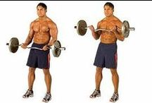 Biceps Workout / Exercises / Whether you want massive guns or just want to tone up those arms, these Bicep Workouts and Exercises will do the trick!