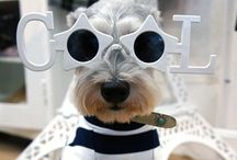 Bow Wows / Cute & Loveable Pups
