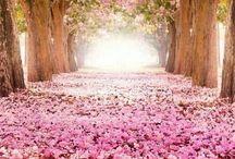 Nature / Amazing nature. Beautiful Scenery. Photography.