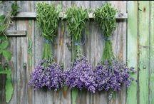 Gardening / by Lisa Davis