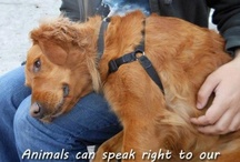 kindness, love & truth / Helping to restore faith in humanity  / by compassionate vegan
