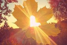 Autumn / Fall is upon us and those beautiful golden leaves make Autumn the most magical season of the year.