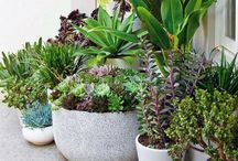 MY ROOF GARDEN / Plants, flowers, outdoors