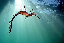 Seahorses / by Lisa Davis