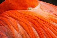 Oranges / Orange is a glorious color! / by Kristin N