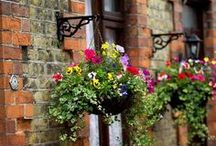 Hanging baskets / by Homebase