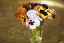 Pretty Pansies / by Libby Priest
