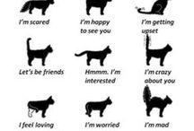 Katter ~ Cats / Katter