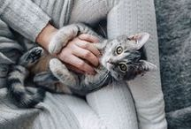 Cats / Cats are so cute!