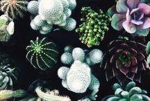 Gardening || Jardinear / by Paloma Ibarra