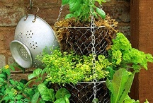 Kitchen garden / Ideas for growing herbs, fruit and vegetables