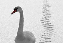 Animals ~ Feathered / by Janice Elaine