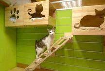 Cat furniture / by Jessica C.