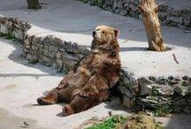 Animals ~ Bears, all kinds / by Janice Elaine
