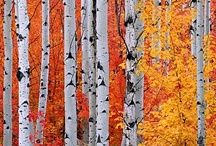 fall / by Christine Armour