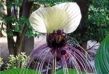 Vous avez aimé & repinné / Les plantes ré-épinglées et aimées par les internautes ...