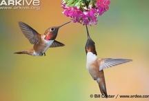 Hummingbird Home
