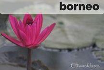 Destination: Borneo / Destination: Travel to Borneo
