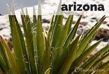 Destination: Arizona USA / Destination: Travel to Arizona, USA