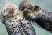 Really cute animals  / by Madison Hourihan