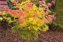 """Plantes et couleurs d'automne / Découvrez des plantes originales telles que le Cornouiller """"Fluo"""", le Saule """"Griffe de loup"""" ou encore la Rose de Noël Noir, Jaune, ou Blanche .."""