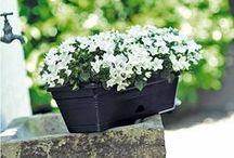 Jardin d'été / Plantes d'été, pot, bac, mobilier de jardin, décoration et éclairage nocturne... pourront inspirer votre jardin d'été!