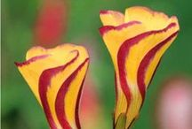 Plantes du monde / Découvrez nos plantes originaires des quatre coins de la planète...
