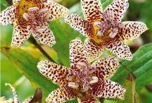 Fleurs à couper / Ces fleurs à couper vous permettront de former de magnifiques bouquets pour décorer et parfumer votre intérieur...