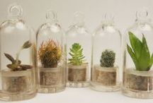 Labola Loves Terrariums / Labola loves these mini gardens inside of glasses, jars,vases and cloches. they are a really fun and cute centrepiece or gift.  Follow us at #Labola.co.za