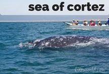 Cruising the Sea of Cortez / Cruising the Sea of Cortez, a UNESCO World Heritage Site