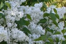 Trees and Shrubs / by National Home Gardening Club