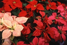 Christmas / by National Home Gardening Club