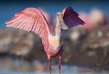 Best Birding Spots
