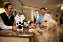 Best Pet-Friendly Hotels / Pet Friendly Hotels including the winners and nominees of Readers' Choice Awards Best Pet-Friendly Hotel
