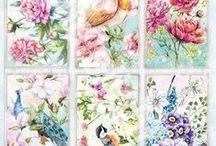 Beautiful Flowers 2016 / Prachtige nieuwe papierlijn met bijpassende stempels, stansen, uitdrukvellen, scrapvellen,  paperpad uni en paperpad deco.