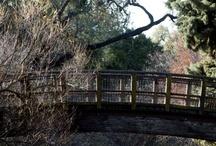 UC Davis Arboretum / The UC Davis Arboretum is the visual gem of the campus, promising exotic blossoms, great walks and ducks galore.  / by UC Davis
