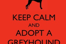 Greyhounds - in memoriam Homer & Harley / by Kundry