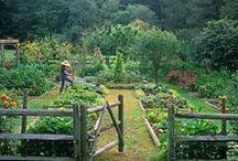 Growing my Garden / by Linda Simons
